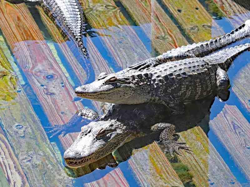 Gatorland in Orlando
